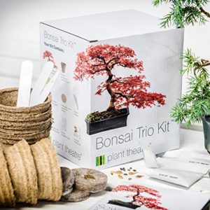 Plant-Theatre-Bonsai-Trio-Kit-3-unverwechselbare-Bonsai-Bume-0